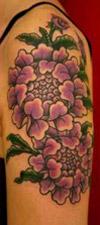 fiori 1 anteprima Fiore di ciliegio